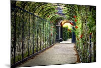 Rose Trellis In Schonbrunn Palace-George Oze-Mounted Photographic Print