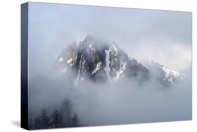 Mt Rainier National Park-Steve Gadomski-Stretched Canvas Print