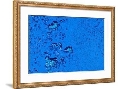 Blue Bubbles-Steve Gadomski-Framed Photographic Print