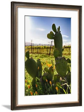 Cactus And Yellow Poppies-George Oze-Framed Photographic Print