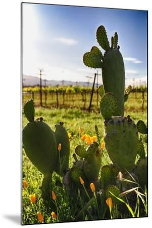 Cactus And Yellow Poppies-George Oze-Mounted Photographic Print