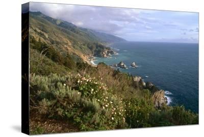 Big Sur Coast Springtime Vista, California-George Oze-Stretched Canvas Print
