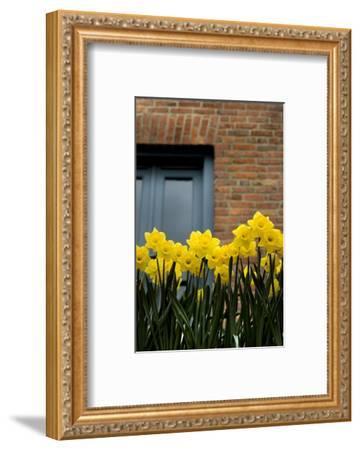 Daffodils-John Gusky-Framed Photographic Print