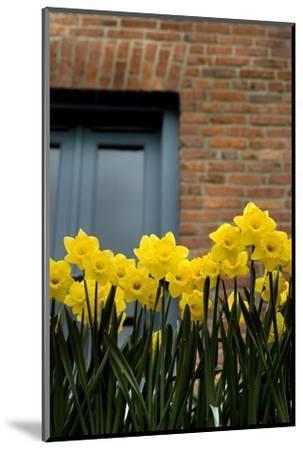 Daffodils-John Gusky-Mounted Photographic Print