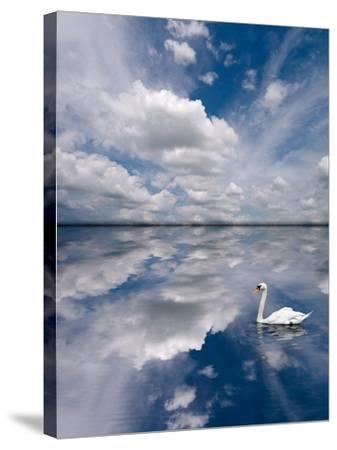 Swan Lake Explorations-Steve Gadomski-Stretched Canvas Print