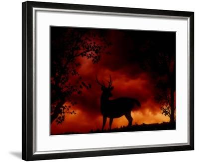 Nature's Morning-Julie Fain-Framed Art Print