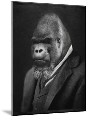 Mario Gorillini-Grand Ole Bestiary -Mounted Art Print