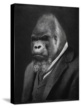 Mario Gorillini-Grand Ole Bestiary -Stretched Canvas Print
