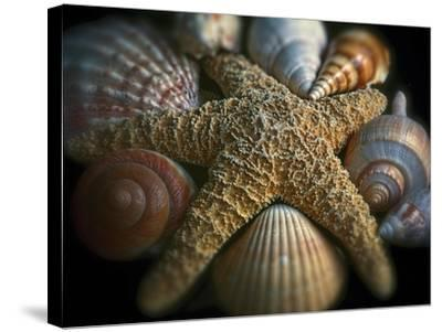 Starfish and Sea Shells-George Oze-Stretched Canvas Print