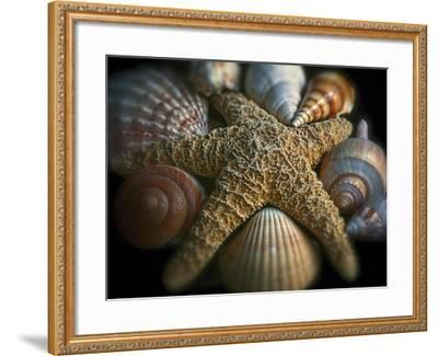 Starfish and Sea Shells-George Oze-Framed Photographic Print