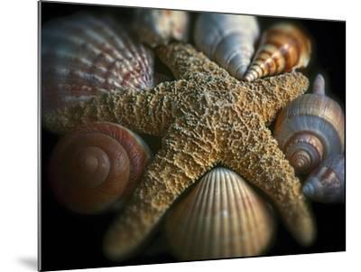 Starfish and Sea Shells-George Oze-Mounted Photographic Print