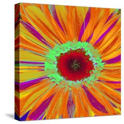 Pop Gerber II-Ricki Mountain-Stretched Canvas Print