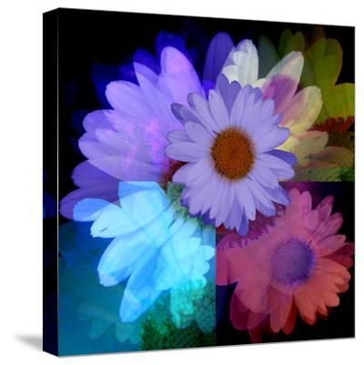 Daisies In Color-Ruth Palmer-Stretched Canvas Print