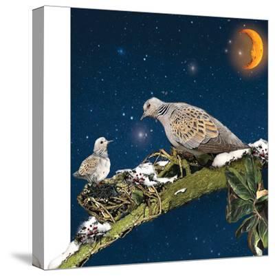 Sleepy Turtledove-Nancy Tillman-Stretched Canvas Print