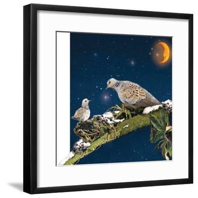 Sleepy Turtledove-Nancy Tillman-Framed Art Print