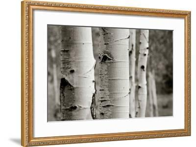 Aspens III-Debra Van Swearingen-Framed Photo