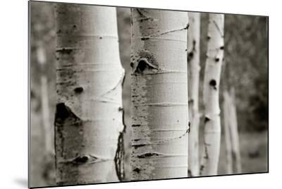 Aspens III-Debra Van Swearingen-Mounted Photo