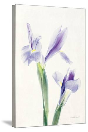 Light and Bright Floral III-Elizabeth Urquhart-Stretched Canvas Print
