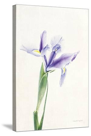Light and Bright Floral IV-Elizabeth Urquhart-Stretched Canvas Print