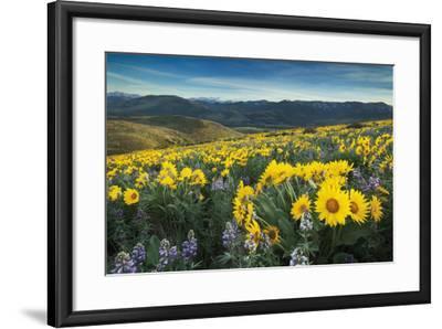 Methow Valley Wildflowers IV-Alan Majchrowicz-Framed Photo