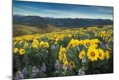 Methow Valley Wildflowers IV-Alan Majchrowicz-Mounted Photo