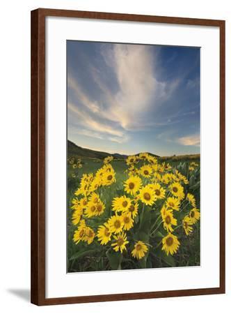 Methow Valley Wildflowers II-Alan Majchrowicz-Framed Photo
