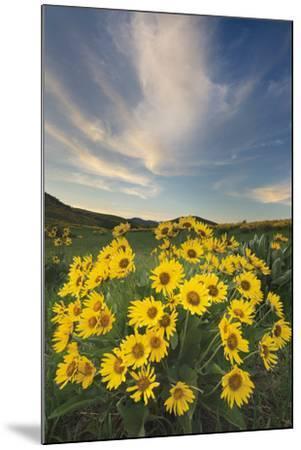 Methow Valley Wildflowers II-Alan Majchrowicz-Mounted Photo