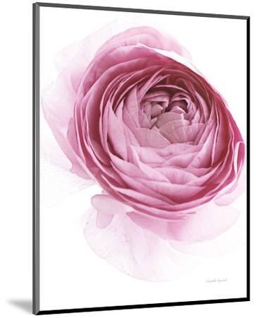 Pink Lady IV-Elizabeth Urquhart-Mounted Photo