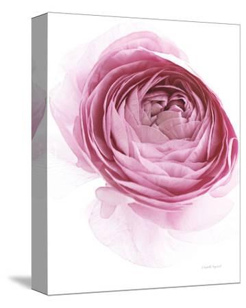 Pink Lady IV-Elizabeth Urquhart-Stretched Canvas Print