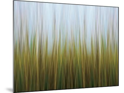 Seagrass Canvas-Katherine Gendreau-Mounted Photo