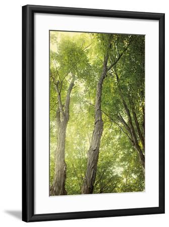 Towering Maples II-Elizabeth Urquhart-Framed Photo