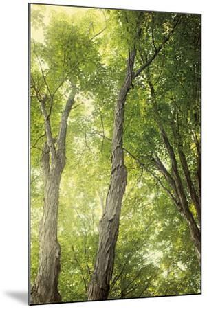 Towering Maples II-Elizabeth Urquhart-Mounted Photo