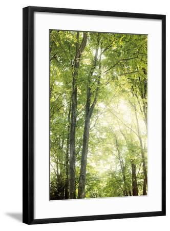 Towering Maples IV-Elizabeth Urquhart-Framed Photo