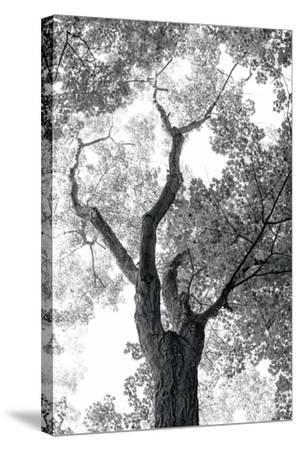 Stand Tall II-Elizabeth Urquhart-Stretched Canvas Print