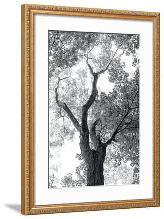 Stand Tall II-Elizabeth Urquhart-Framed Photo