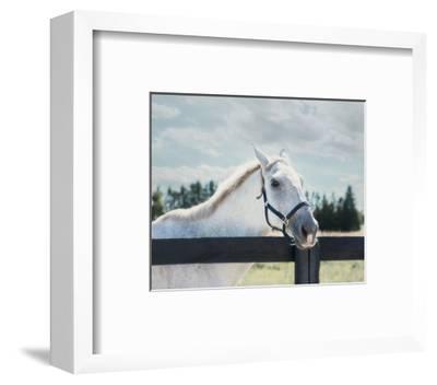 Polo Pony I-Elizabeth Urquhart-Framed Photo