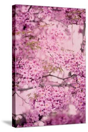 Pink On Pink IV-Elizabeth Urquhart-Stretched Canvas Print