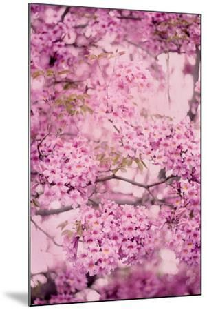 Pink On Pink IV-Elizabeth Urquhart-Mounted Photo