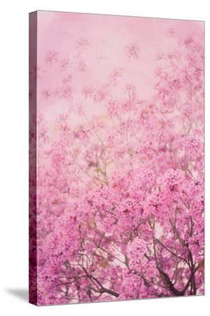 Pink On Pink I-Elizabeth Urquhart-Stretched Canvas Print