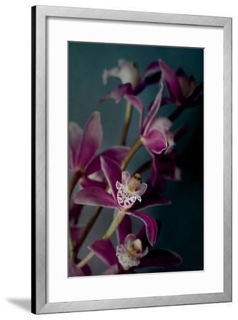 Dark Orchid IV-Elizabeth Urquhart-Framed Photo