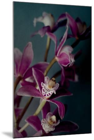 Dark Orchid IV-Elizabeth Urquhart-Mounted Photo