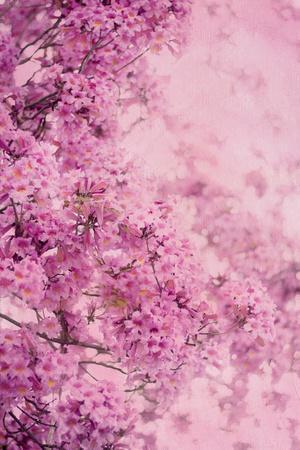 Pink On Pink III-Elizabeth Urquhart-Framed Photo