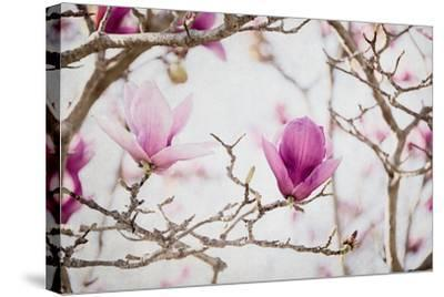 Spring is In the Air II-Elizabeth Urquhart-Stretched Canvas Print
