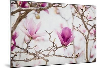 Spring is In the Air II-Elizabeth Urquhart-Mounted Photo