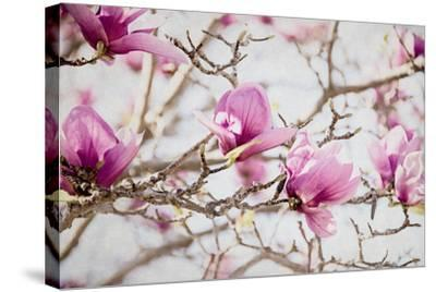 Spring is In the Air IV-Elizabeth Urquhart-Stretched Canvas Print