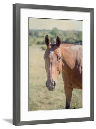 Polo Pony II-Elizabeth Urquhart-Framed Photo
