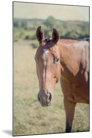 Polo Pony II-Elizabeth Urquhart-Mounted Photo