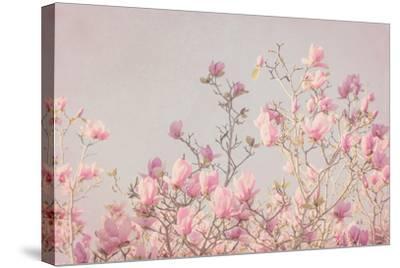 Pink Tree Tops II-Elizabeth Urquhart-Stretched Canvas Print