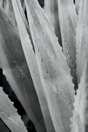 Abstract Agava IV-Elizabeth Urquhart-Framed Photo