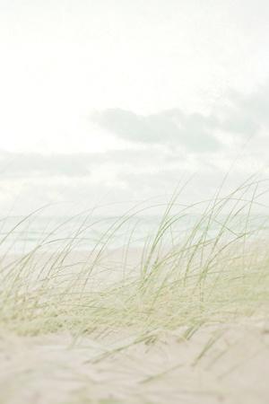Beach Grass I-Elizabeth Urquhart-Framed Photo